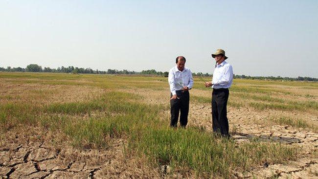 Tiền Giang cứu được 27.000 ha lúa từ hạn, mặn