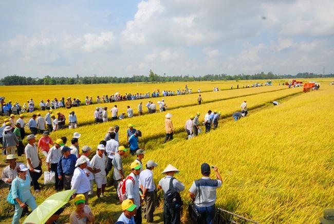 Làm mới nông nghiệp ĐBSCL