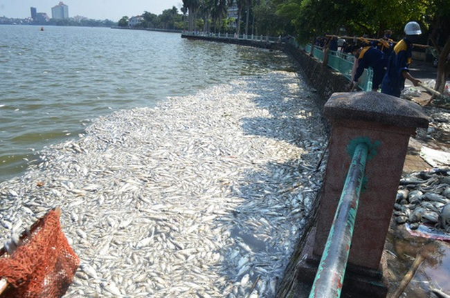 Cá chết 'trắng' Hồ Tây: Phát hiện lượng Amoni tăng gấp 24 lần