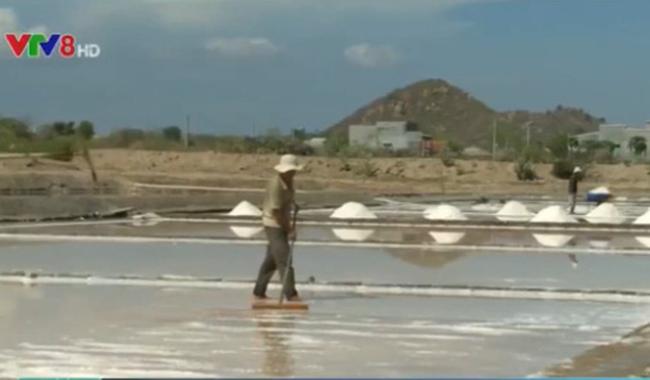 Triển khai thu mua muối tạm trữ cho diêm dân