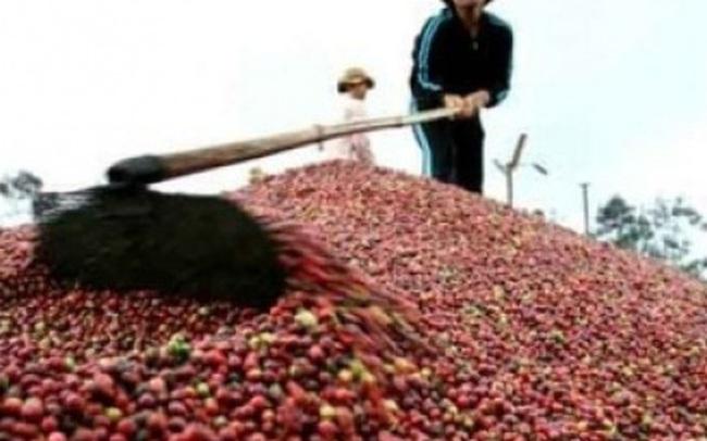 Xuất khẩu cà phê cần thận trọng trong niên vụ mới