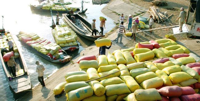 Xuất khẩu gạo 5 tháng đầu năm sụt giảm