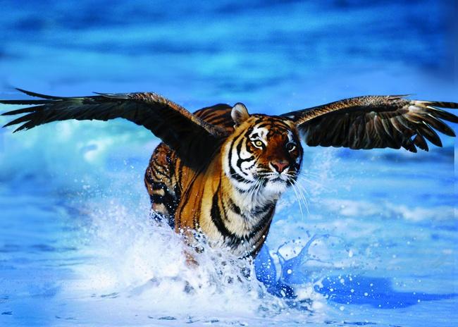 Bộ Công thương ra văn bản cứu ngành thép, Hòa Phát như hổ mọc thêm cánh