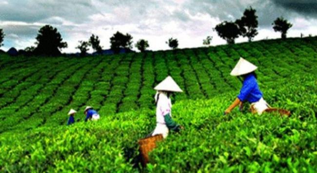 Nhà nước nắm 51% vốn điều lệ TCT Lâm nghiệp Việt Nam
