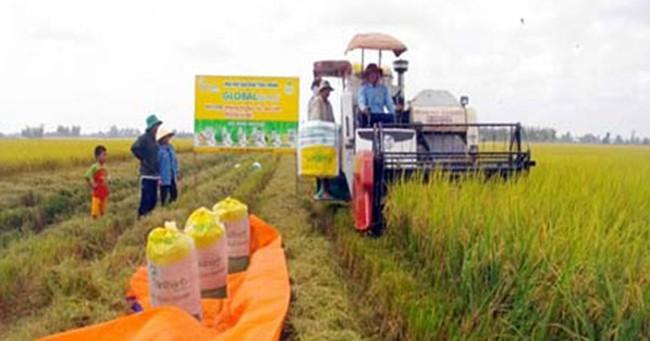 Không đề xuất tạm trữ lúa do giá tăng cao
