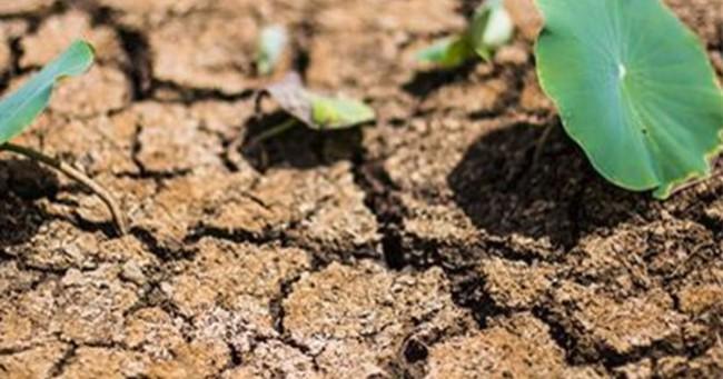 Bloomberg: Bức tranh kinh tế Việt Nam không vì nông nghiệp mà u ám
