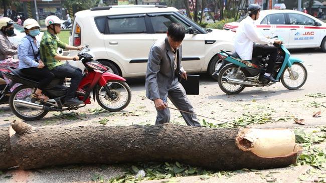 Hà Nội cử người đi nước ngoài học cắt tỉa cây xanh