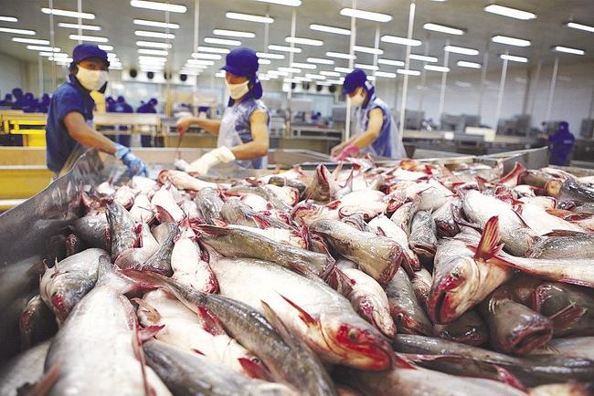 Cá chết, tôm dịch bệnh: Kim ngạch xuất khẩu thủy sản vẫn tăng 4,6%