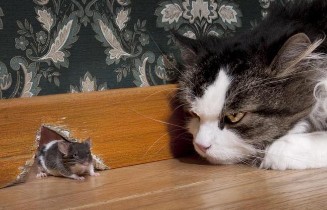 Bí quyết đầu tư: Mèo nhỏ bắt chuột như thế nào?