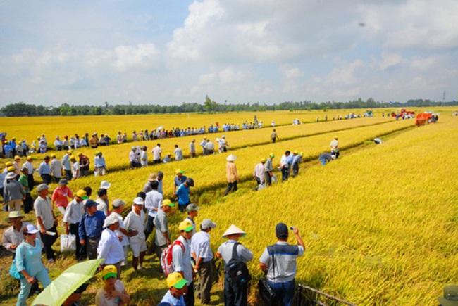 Làm gì để nông nghiệp, để đất nước phát triển bền vững?
