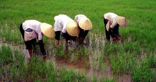 Điều gì cản trở đà tăng trưởng ở Việt Nam?