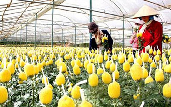 Bớt trồng lúa để thúc đẩy nông nghiệp Việt phát triển?