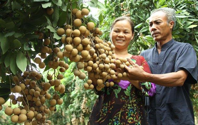 Xây dựng thương hiệu nông sản: Bỏ ngỏ, lệ thuộc nước ngoài