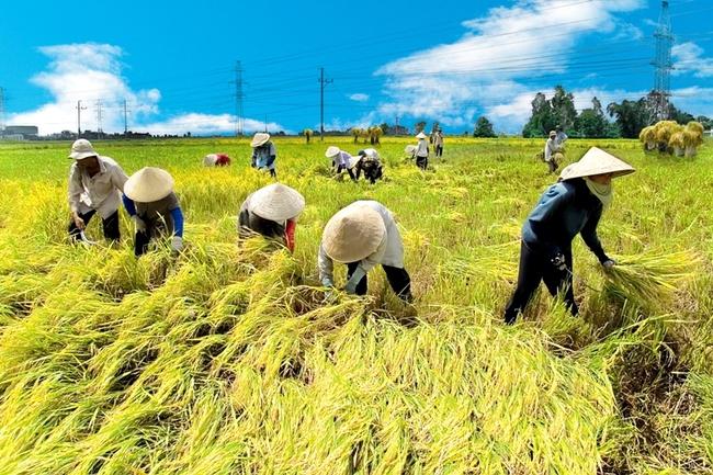 Doanh nghiệp tấn công vào ngành nông nghiệp