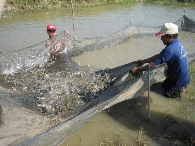 Thủy sản, 'se duyên' để phát triển