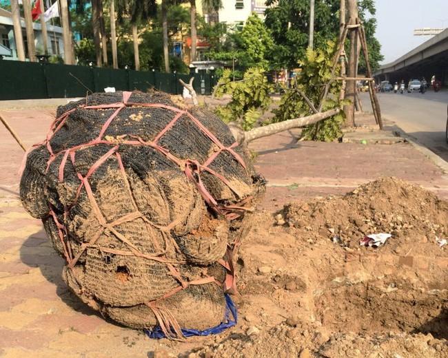 Nhiều dự án cắt cỏ, tỉa hoa giá chục tỷ tại Hà Nội