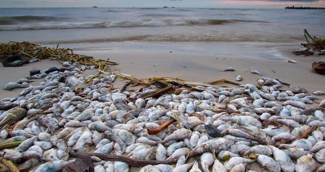 [Infographics] Bảy nhóm được bồi thường do sự cố môi trường biển