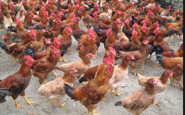 Dabaco tham vọng xây dựng chuỗi siêu thị tại Bắc Ninh