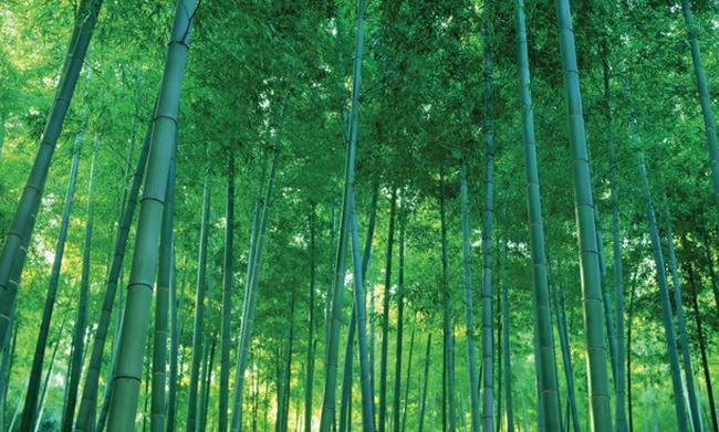 Bamboo Capital: Tính nới room ngoại lên 100%; huy động vốn lớn trong năm 2016
