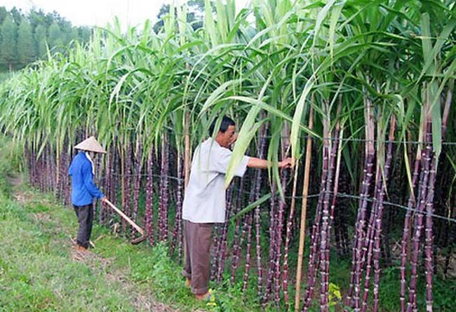 Công ty con của Thương Mại Thuận Thiên rót 120 tỷ đồng mua thêm cổ phần SBT