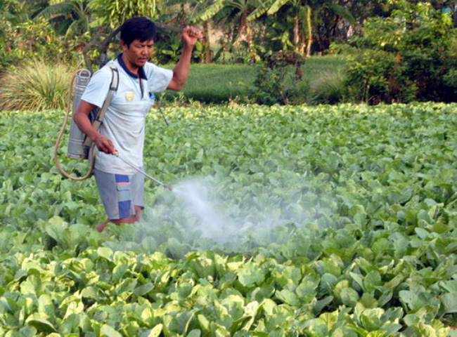 99% rau cải xanh nhiễm thuốc bảo vệ thực vật