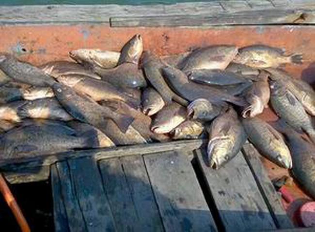 Phó Thủ tướng yêu cầu làm rõ nguyên nhân hải sản chết bất thường