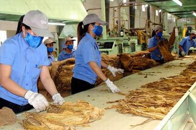 Hạn ngạch nhập khẩu thuốc lá nguyên liệu năm 2016