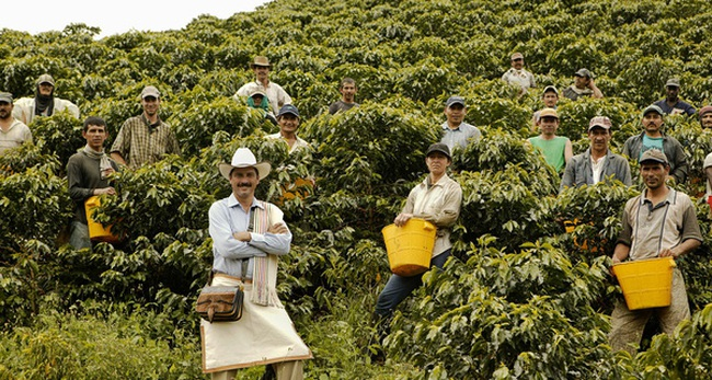 Giáo sư Havard: Cà phê Việt đủ ngon, nhưng giá vẫn rớt thảm vì không biết quảng bá