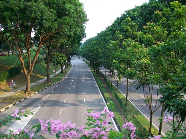 Hà Nội muốn trồng 1 triệu cây xanh, nhìn cách người Singapore đưa rừng vào thành phố