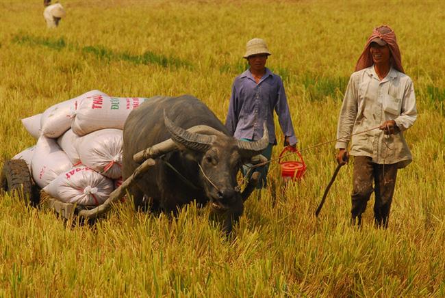 Quản lý và phát triển thương hiệu gạo Việt Nam