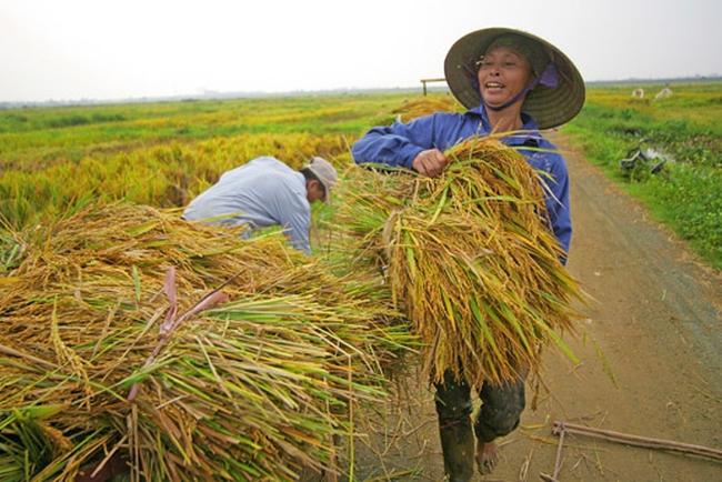 Sôi động thì trường xuất khẩu gạo