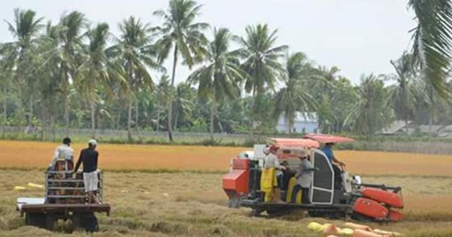 Thất thoát gần 800 triệu USD do thu hoạch và bảo quản lạc hậu