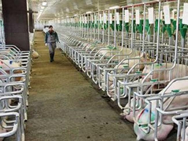 Việt Nam bắt đầu nhập khẩu nội tạng lợn từ thị trường Nga