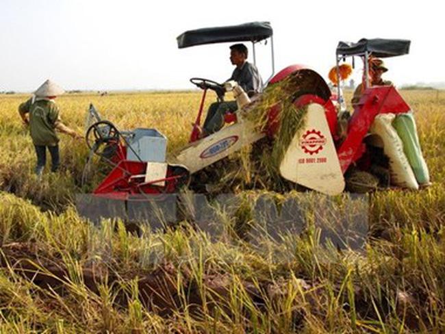 Giá thành sản xuất lúa tại Hậu Giang thấp nhất khu vực ĐBSCL