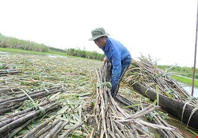 Đường Thái 'giết chết' đường Việt