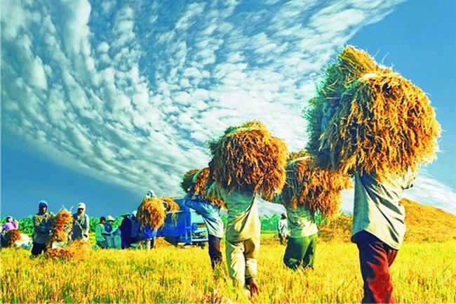 Ngân hàng Thế giới: Nhiều quốc gia đang học tập Việt Nam về an ninh lương thực
