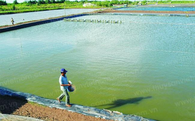 Chính phủ bãi bỏ Thông tư 98 của Bộ Tài chính, đưa thuế nhập khẩu mặt hàng Artemia về 0%