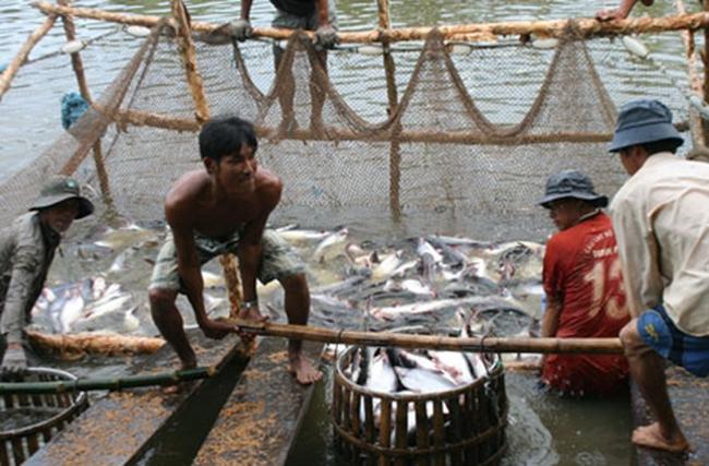 """Cá tra Việt Nam sẽ tiếp tục """"vượt cạn"""""""