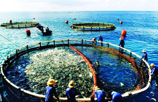 Tăng trưởng sản lượng khai thác và nuôi trồng thủy sản