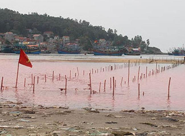 Chuyên gia nói về thủy triều đỏ gây chết cá ở miền Trung