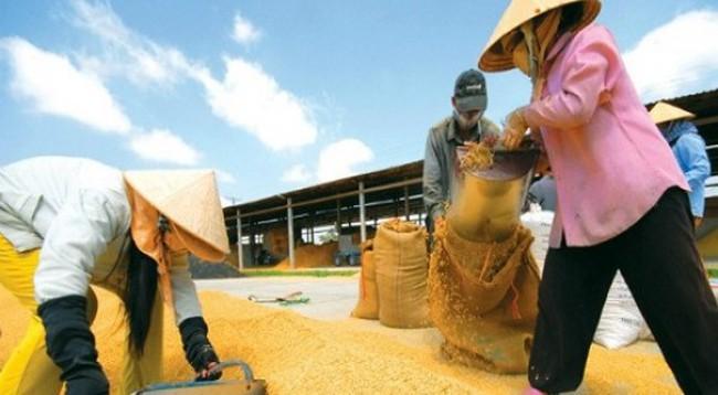 Gạo Việt Nam từng bước tiến vào thị trường châu Âu
