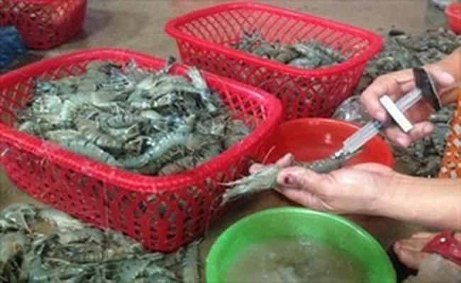 Bạc Liêu: Bắt quả tang 2 vụ bơm tạp chất hàng trăm kg tôm