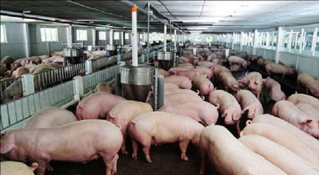 Chăn nuôi Mitraco niêm yết trên HNX với giá tham chiếu 20.000 đồng/cổ phiếu