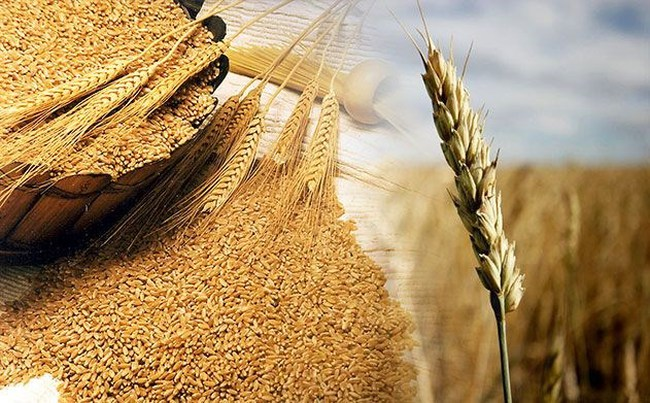 Giá lương thực thế giới tăng mạnh nhất trong vòng 4 năm qua