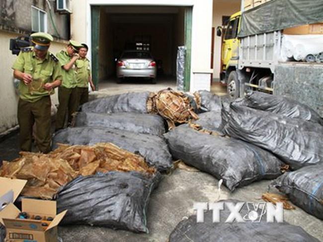 Liên tiếp bắt giữ hai vụ vận chuyển thịt lợn thối số lượng lớn