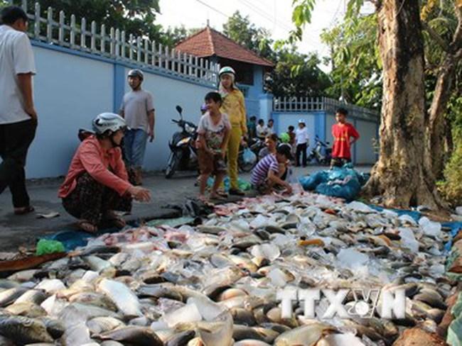 Phó Thủ tướng yêu cầu kiểm tra tình trạng cá chết ở sông Đồng Nai