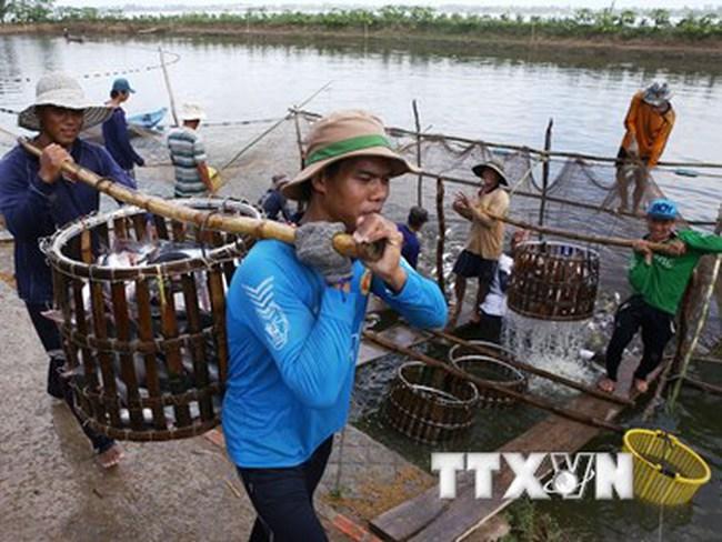 Xâm nhập mặn ngày càng gây ảnh hưởng lớn đến sản xuất thủy sản