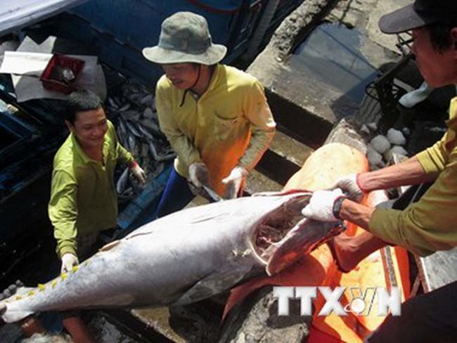 Khai thác thủy sản đầu năm tăng cao, nghề cá tra vẫn lỗ nặng