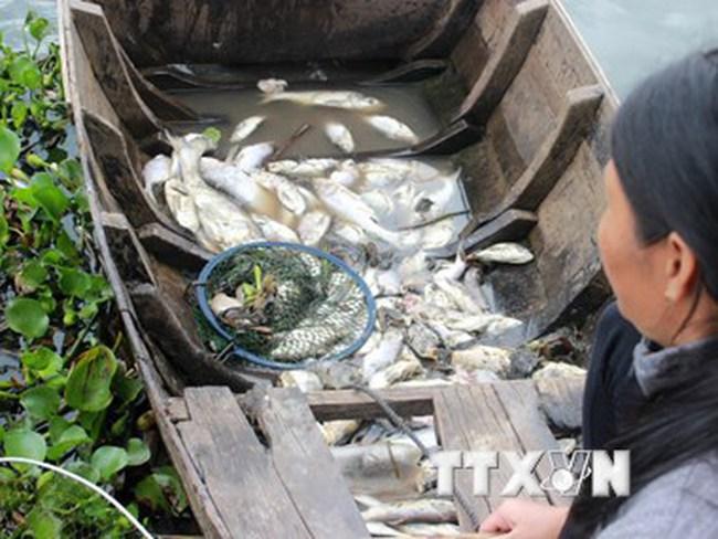 Tìm ra nguyên nhân khiến cá chết hàng loạt ở An Giang