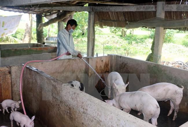 Giá thu mua lợn hơi tại một số tỉnh phía Nam tiếp tục giảm